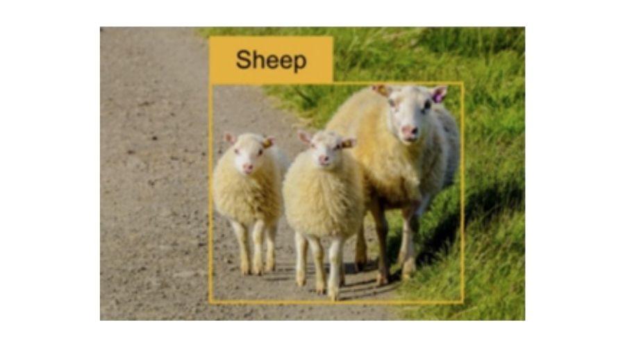 Sheep pixels